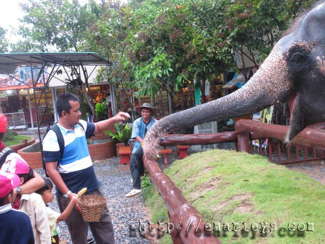 bagi gajah makan