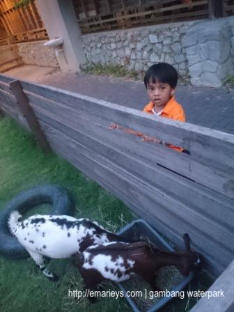 Gambang Waterpark21