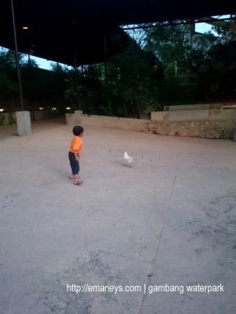 Gambang Waterpark22