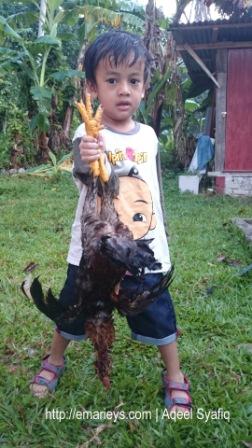 Sembelih Ayam