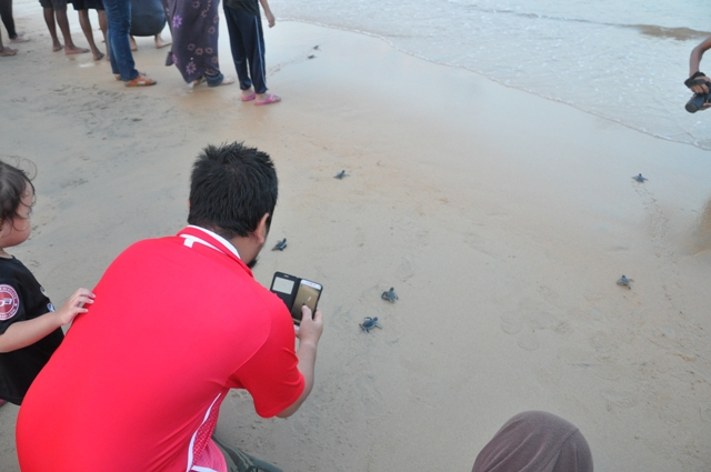 Pengalaman Melepaskan Anak Penyu Di Pantai Cherating