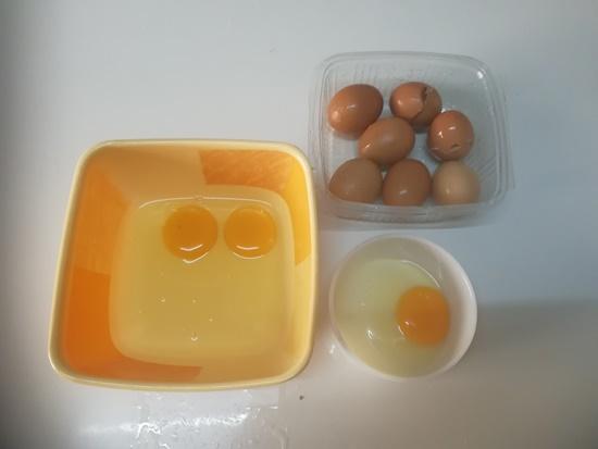 adunan telur